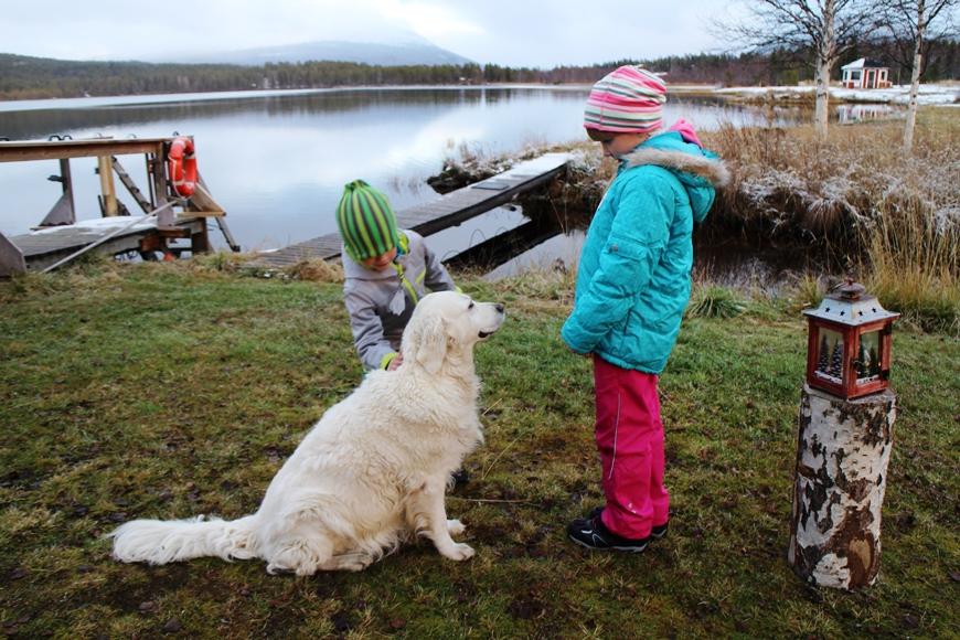 Sohvi-koira tuli Vesa Kaulasen mukana tarkistamaan saunan tilanteen ja siitäkös lapset ilahtuivat. Kuva: KivaaTekemistä.fi