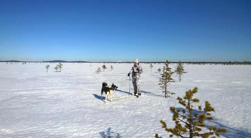 Kuva: Kieringin Lomakylä