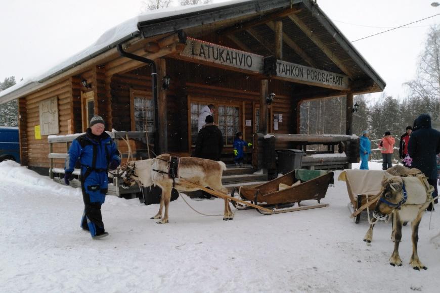 Päivi palveli suomalaisia ja venäläisiä matkailijoita. Hän kertoi, että poro on niin omapäinen eläin, että sitä ei ihan joka emäntä hoida. Kuva: KivaaTekemistä.fi