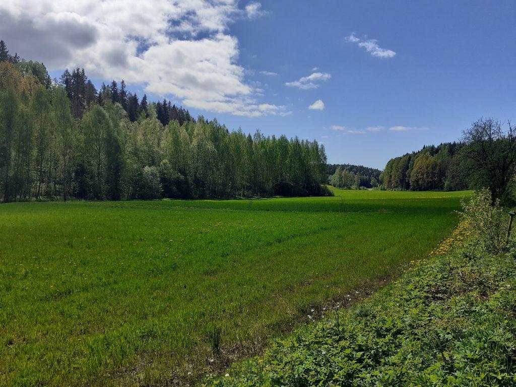 Peltomaisema Sipoonkorven kansallispuistossa.