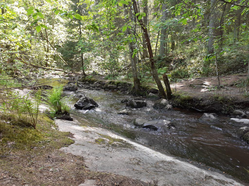 Virtaava puro Sipoonkorven pohjoisosissa.