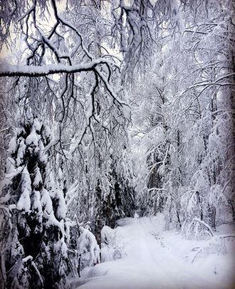 Tässä toinenkin kuva kokonaisena upeista Kolin lumimaisemista. :) Kuva: Kolin Keidas (ylempi kuva osin peitossa jotta etusivun valkoinen teksti erottuu)