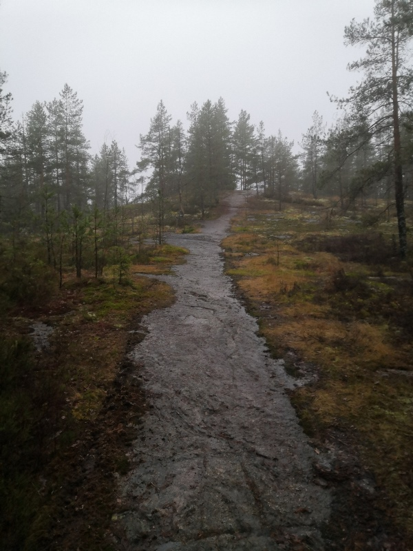 The Finnish forest, not depending the season, is worth to experience and calm your mind. Photo: LikeFinland.com